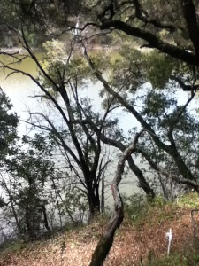 lake -hillside view
