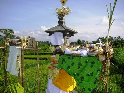 Ritual Rice Field (© Ministry of Education and Culture of Indonesia)