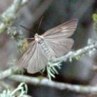 moth_DxOFP