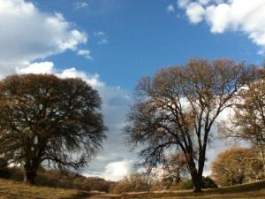 9 -oaks