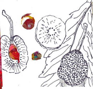 seed pop