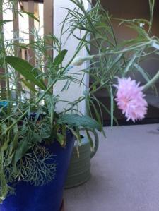 3 pink flower